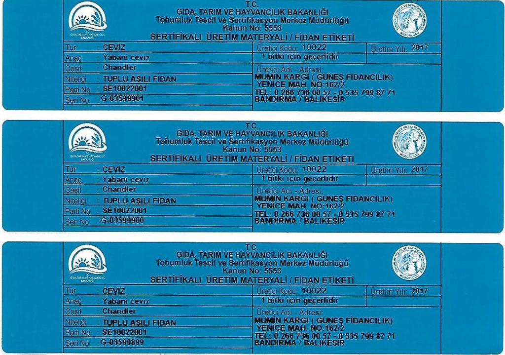 mavi-sertifika-ceviz-fidani